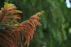 Branche d'arbre sous la lumière du soleil Photo stock