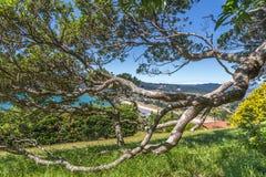 Branche d'arbre tordue en parc d'été Photo libre de droits