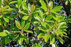 Branche d'arbre tropicale Photos stock