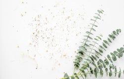 Branche d'eucalyptus de bébé sur la table blanche Photographie stock