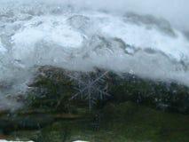 Branche d'hiver Image libre de droits