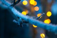 Branche d'hiver avec la neige et les lumières troubles photos stock