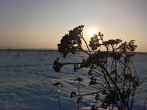 Branche d'hiver de coucher du soleil Photographie stock libre de droits