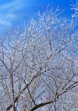Branche d'hiver sur le ciel clair bleu Photographie stock libre de droits