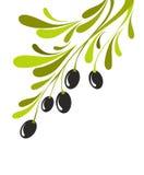 Branche d'olivier illustration libre de droits