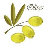 Branche d'olivier avec les olives vertes sur un fond blanc illustration stock