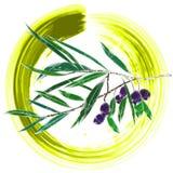 Branche d'olivier d'imagination Photos libres de droits