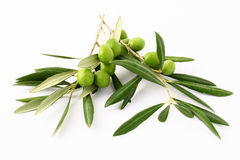 Branche d'olivier et olives#2 vert Photos stock