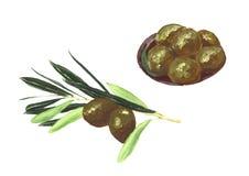 Branche d'olivier d'isolement sur le fond blanc avec des olives Photographie stock