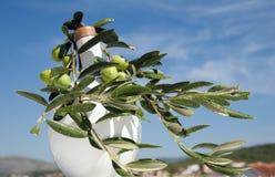 Branche d'olivier sur l'horizontal Photographie stock libre de droits