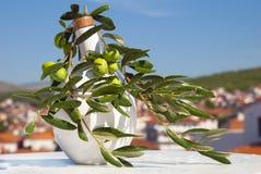 Branche d'olivier sur l'horizontal Image libre de droits