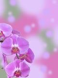 Branche d'orchidée de Phalaenopsis avec le fond de Bokeh Images stock