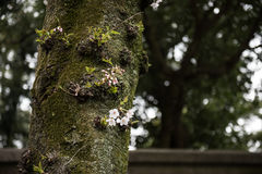 Branche d'un arbre Image libre de droits