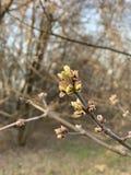 Branche d'un arbre au printemps images libres de droits