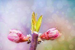 Branche d'un arbre de floraison sur le fond de jardin photographie stock