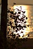 Branche de bouleau avec des feuilles dans les rayons du coucher de soleil sur la plage images stock