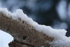 Branche de bouleau avec la couverture de neige Image stock
