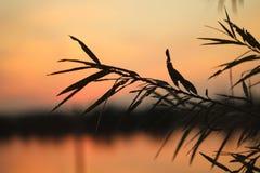 Branche de Bush sur le fond du coucher du soleil photos libres de droits