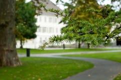 Branche de cèdre en parc urbain Image libre de droits