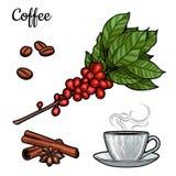 Branche de café Usine avec des feuilles, baies Boisson naturelle de caféine Bâtons de cannelle, anis illustration stock