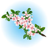 Branche de cerise fleurissante Illustration de Vecteur