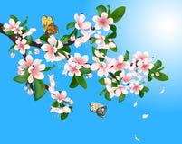 Branche de cerise fleurissante avec des papillons et des pétales de vol sur un fond de ciel bleu illustration libre de droits