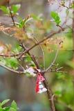 Branche de cerisier avec le martisor, symbole traditionnel de la première journée de printemps image libre de droits