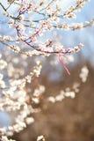 Branche de cerisier de floraison avec le martisor - sym traditionnel image libre de droits