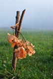 Branche de chêne Photographie stock libre de droits