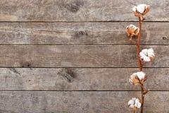 Branche de coton sur le fond en bois photo libre de droits