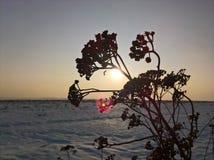 Branche de coucher du soleil Image libre de droits