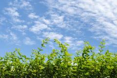 Branche de feuille avec le ciel bleu Images libres de droits