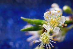 Branche de fleur Photo stock