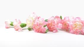Branche de fleur d'oeillet Photographie stock libre de droits