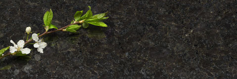 Branche de fleur de prune sur la partie supérieure du comptoir antique de granit de Brown Image libre de droits