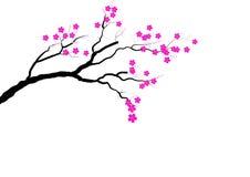 Branche de fleurs de cerisier sur le fond blanc, illustration de vecteur Images libres de droits