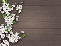 Branche de floraison de cerise de ressort sur le vieux fond en bois illustration stock