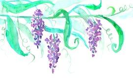 Branche de floraison de glycine avec des feuilles watercolor Photos libres de droits