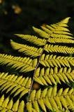 Branche de fougère Photo stock