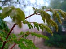 Branche de l'adolescence de l'arbre photos stock