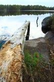 Branche de lac Image libre de droits