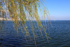 Branche de lac et de saule images stock