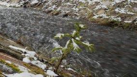 Branche de Milou de jeune balancement d'arbre de Noël du vent sur le fond de la cascade rapide créant la mousse énorme dessus clips vidéos