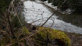 Branche de Milou de jeune balancement d'arbre de No?l du vent sur le fond de la cascade rapide cr?ant la mousse ?norme dessus banque de vidéos
