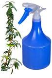 Branche de myrte, pulvérisateur Photos stock