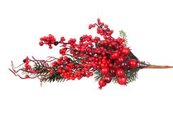 Branche de Noël avec les fruits rouges Photos stock