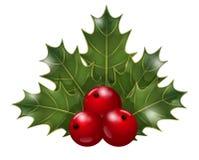 Branche de Noël de houx Photo libre de droits