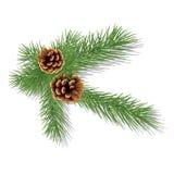 Branche de pin avec des cônes Images stock