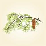 Branche de pin avec le vecteur de cône de pin Images stock