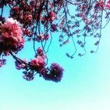 Branche de Rose Image stock